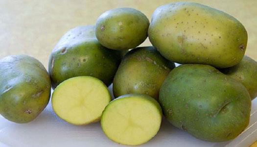 رنگ-سبز-پوست-سیب-زمینی